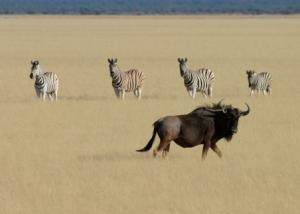 Animal Firm: savannes - Kwaliteit van Medewerkers