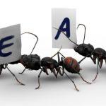 Leren van mieren, kraaien, wilde honden...
