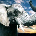 High-Performance-Team-elephant