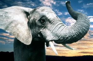 High Performance Leadership - Elephant