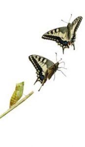 organizational-renewal-dactylo
