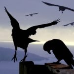 Animal Firm: Kraaien - Continue verbetering en Vernieuwing