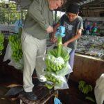 16. visiting banana plant 3
